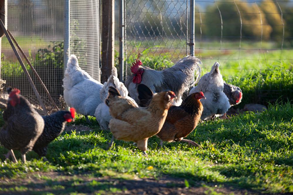 Ens Your Garden S Best Pest Control